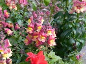 This is yet another test photo.